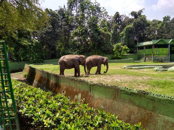 Alipore Zoo, Kolkata Best Zoo In India