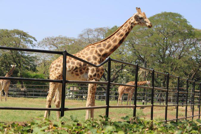 Mysore Zoo: Best Zoo In India