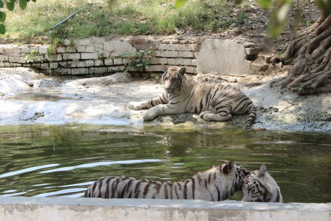 National Zoological Park, Delhi: Best Zoo In India