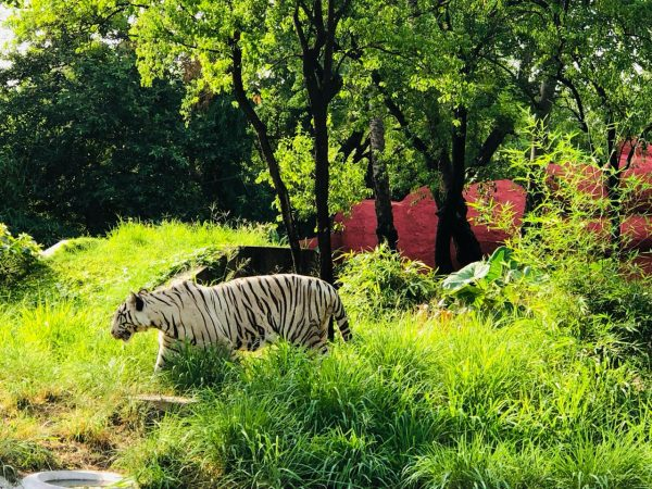 Nehru Zoological Park, Hyderabad: Best Zoo In India