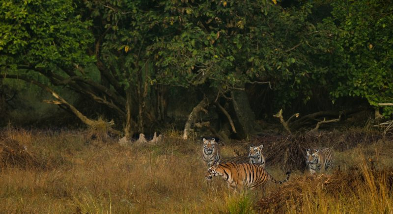 Kanha National Park best destinations to visit in india