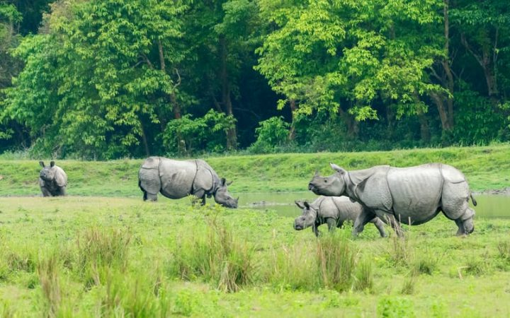 Kaziranga National Park best destinations to visit in india