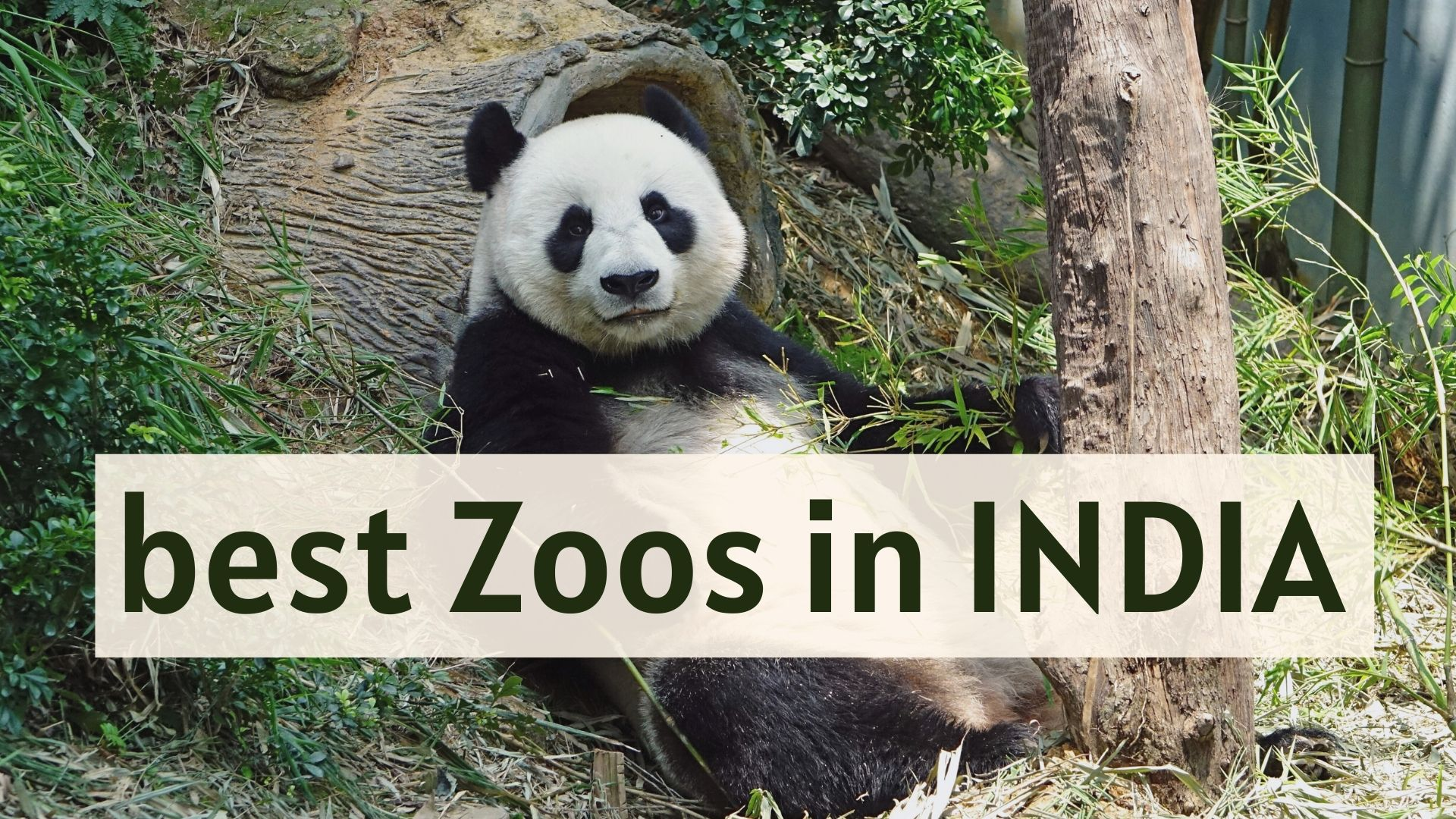 best Zoo in INDIA